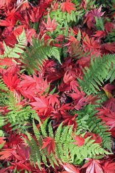 Free Autumn Leaves Stock Photos - 28366103