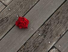 Free Falling Rose Bloom Royalty Free Stock Photos - 28369988