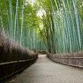 Free Bamboo Grove In Arashiyama In Kyoto, Japan Royalty Free Stock Photos - 28373258