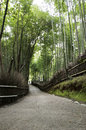 Free Bamboo Grove In Arashiyama In Kyoto, Japan Royalty Free Stock Photo - 28373275