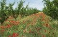 Free In Spring Garden Stock Image - 28375471
