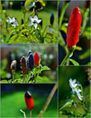 Free Red Chilli Pepper Stock Images - 28377104