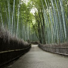 Free Bamboo Grove In Arashiyama In Kyoto, Japan Royalty Free Stock Photos - 28373258