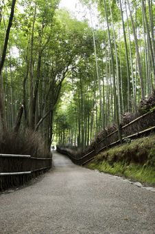 Free Bamboo Grove In Arashiyama In Kyoto, Japan Royalty Free Stock Photo - 28373275