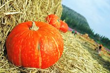 Free Orange Pumpkins Stock Image - 28375381