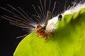 Free Strange Caterpillar Royalty Free Stock Photography - 28385977