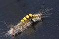 Free Strange Caterpillar Stock Images - 28385994