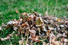 Free Leafs Stock Photography - 28380642