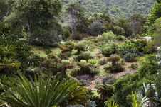 Free Cycad Garden Royalty Free Stock Photo - 28381725