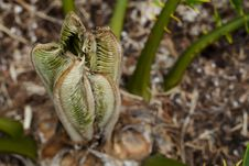 Free Young Cycad Stock Photos - 28382033
