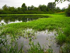 Free Green Marsh Land In Forest Stock Photo - 28382060