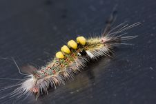 Free Strange Caterpillar Stock Images - 28385994