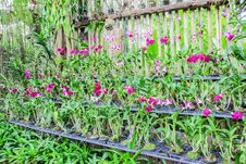 Free Various Set Of Orchids In Nursery Of Garden Stock Photo - 28395310