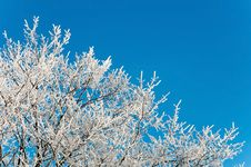 Free Branches Of A Tree In Frost Royalty Free Stock Photos - 28396078