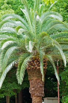 Free Palm Tree Stock Images - 28396354