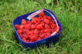 Free Basket Full Of Raspberries Royalty Free Stock Image - 2842036