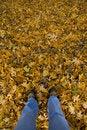 Free Leggy Leaves Stock Image - 2846931