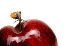Free Small Snail On Apple Stock Images - 2840794