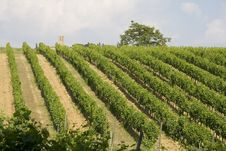 Free Tuscany Vineyard Royalty Free Stock Images - 2842379