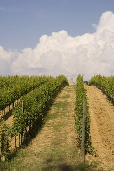 Free Tuscany Vineyard Royalty Free Stock Photos - 2842388