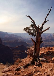 Free Tree At The Grand Canyon Stock Photos - 2842443