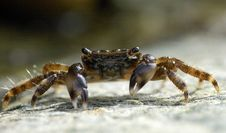 Free Portrait Of Crab Royalty Free Stock Images - 2842449