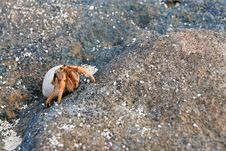 Free Hermit Crab Royalty Free Stock Photos - 2842818