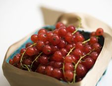 Free Red Currant Royalty Free Stock Photos - 2842878