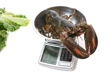 Free Lobster On Scale Stock Photo - 2843490