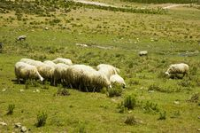 Free Herd Of Sheep Stock Photography - 2844462