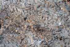 Free Abstract - Soil Background Royalty Free Stock Image - 2844566