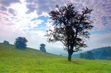 Free Lonely Tree Stock Photos - 2846653