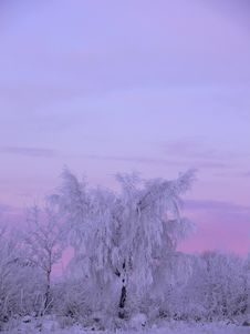 Free Frosty Tree Stock Photography - 2847992