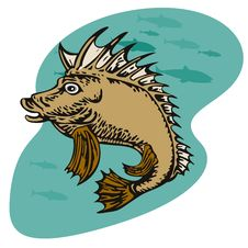 Free Pigfish About To Charge Underw Royalty Free Stock Image - 2848296