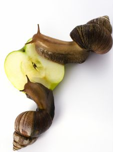 Free Snails Eats An Apple Royalty Free Stock Photography - 2849827