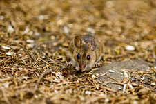 A Mouse On The Forest Floor Stock Images