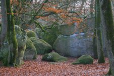 Forest Of Fontainebleau Stock Image