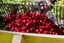 Free Cowberry Stock Image - 28405701