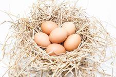 Free Eggs Stock Image - 28406531