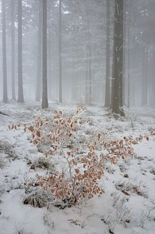 Free Winter Forest Stock Photo - 28412850