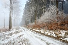 Free Forest Road Royalty Free Stock Photo - 28412875