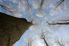 Free Crown Of Trees Stock Photography - 28412882
