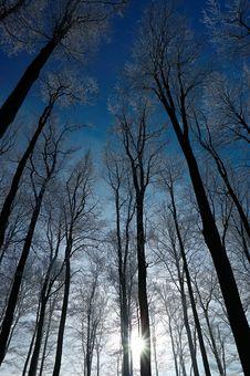 Free Crown Of Trees Stock Photos - 28412883