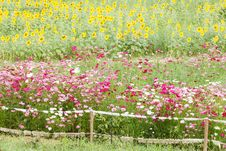 Free Beautiful Flowers In The Meadow Royalty Free Stock Photos - 28415678