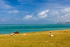 Free Sheep To The Sea In France Royalty Free Stock Photography - 28419777