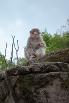 Free Monkey Stock Photography - 28419842