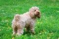 Free Dog Stock Photography - 28421362