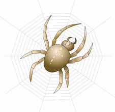 Free Vector Spider Royalty Free Stock Images - 28421639