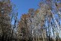 Free Swamp Trees Stock Image - 28432341