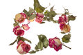 Free Improvised Wreath With Dry Roses And Petals Royalty Free Stock Images - 28444799